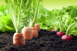 agribuisiness